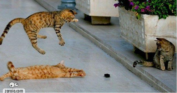 MESA unica do Zaroio  com animais em atitudes comicas 2009100502435013