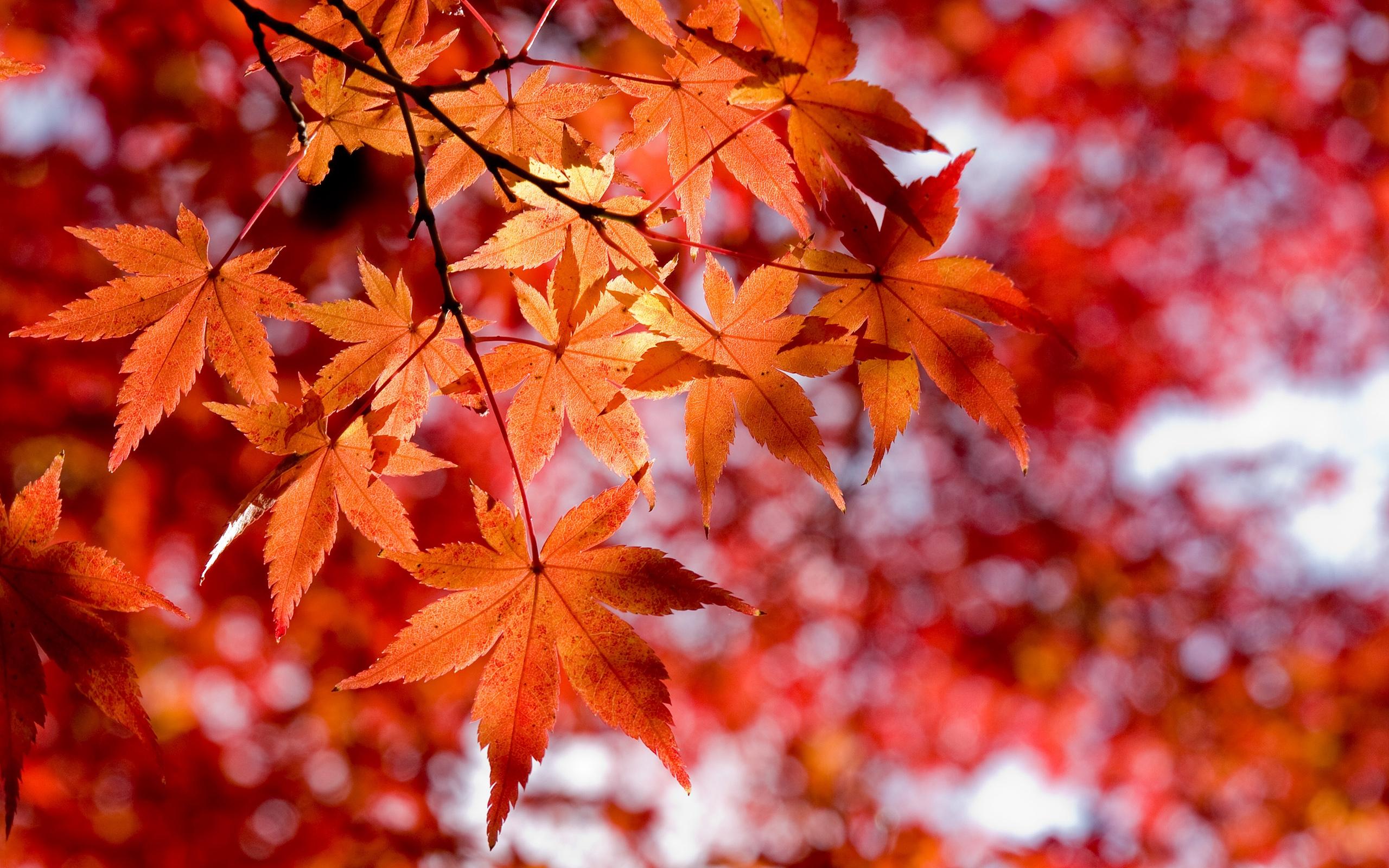 Forumwerbung - Seite 5 Nature_Seasons_Autumn_Red_Maple_Leaves_034857_
