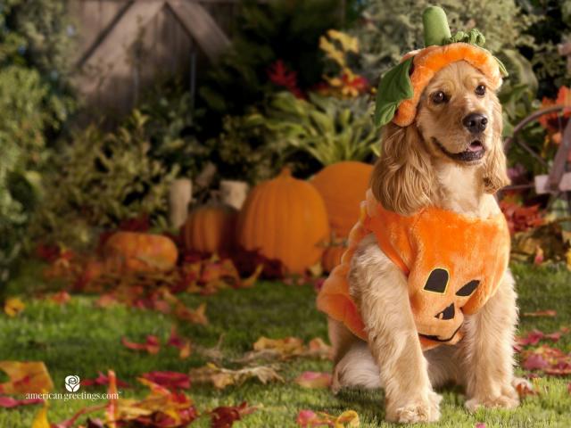 Идеи для Хэллоуина    - Страница 2 Holidays_Halloween__003695_29