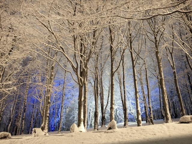Обои для рабочего стола - природа Winter_Winter_evening_in_the_wood_036957_29