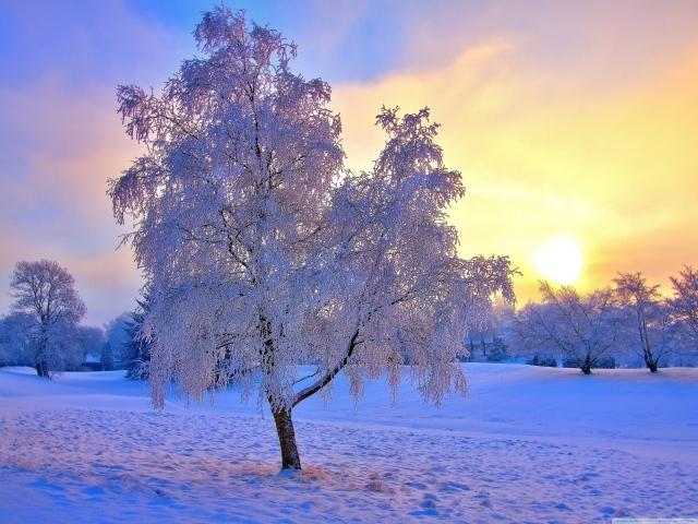 Обои для рабочего стола - природа Winter__037575_29