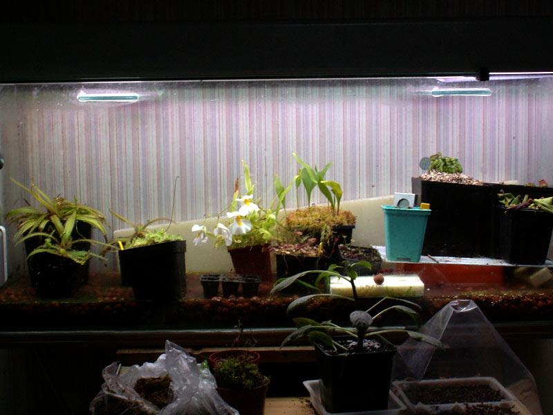 comment augmenter l'humidité dans un terrarium Terra01