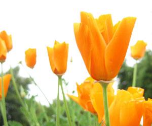 Narandzasta magija - Page 2 Cudesna-moc-boja-narandzasti-cvet
