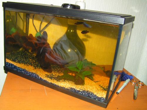 Betta mâle avec 3 femelles - symptomes :-( depuis  3 jours Aquarium-01