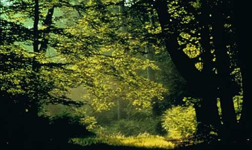 فوائد الغابات Forest-trees