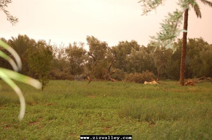 --الرشيدية تتعرض لاعصار مدمر----مع الصور--اتمنى الدعاء Cyclone-errachidia---22