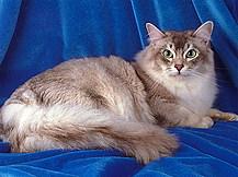 """Конкурс """"Кошка"""" - Страница 2 1599i"""