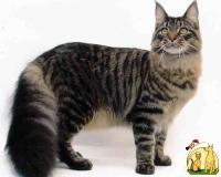"""Конкурс """"Кошка"""" - Страница 2 11_9"""