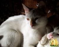 """Конкурс """"Кошка"""" - Страница 2 30_9"""