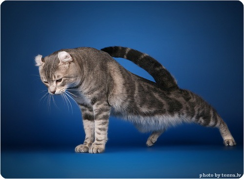 "Конкурс ""Кошка"" IMG_6048"