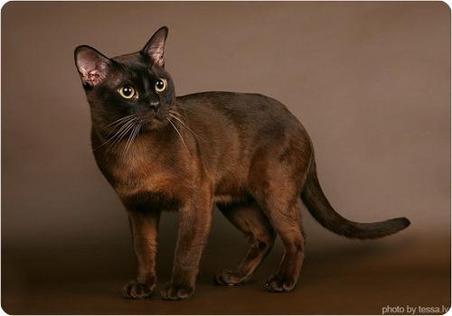 """Конкурс """"Кошка"""" - Страница 3 IMG_3122"""