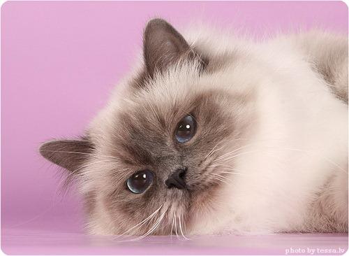 "Конкурс ""Кошка"" IMG_3967"