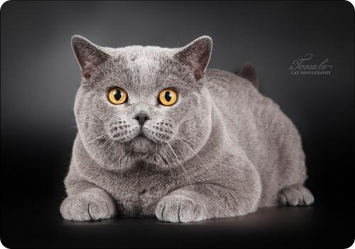 "Конкурс ""Кошка"" IMG_8238"