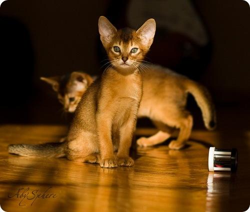 Необычные и редкие породы кошек и собак 708099857