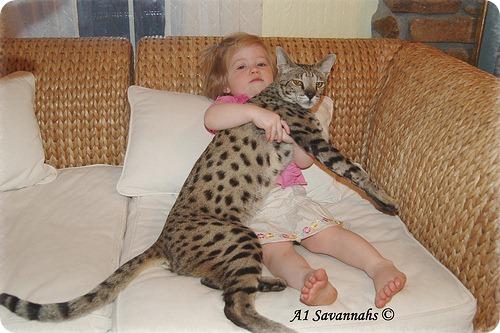 Необычные и редкие породы кошек и собак 2574084765_6365ecb9d5