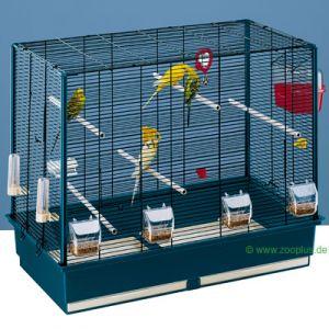 combient de perruches pour cette cage ? 15053_1
