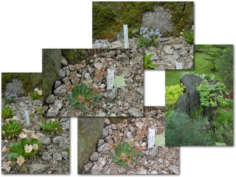 Rock' Gardener Club Prague 1711834