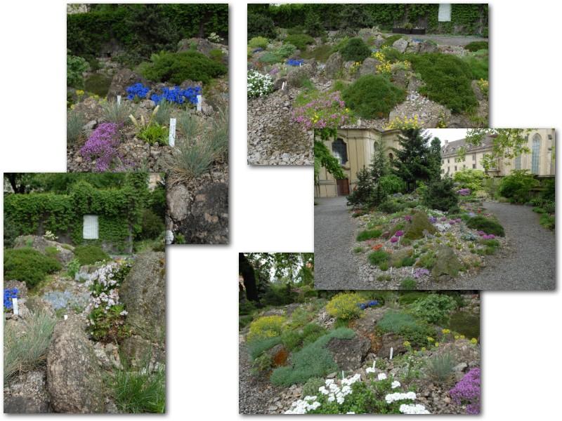 Rock' Gardener Club Prague 1711844