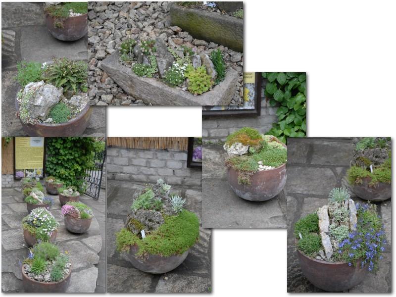 Rock' Gardener Club Prague 1711879