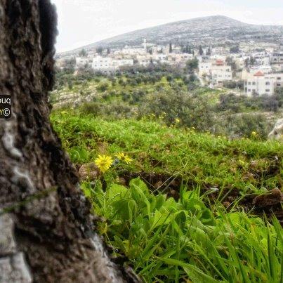 فلسطين في صور 740862225