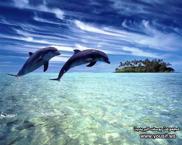 حقائق مذهلة عن الدلافين 379003438
