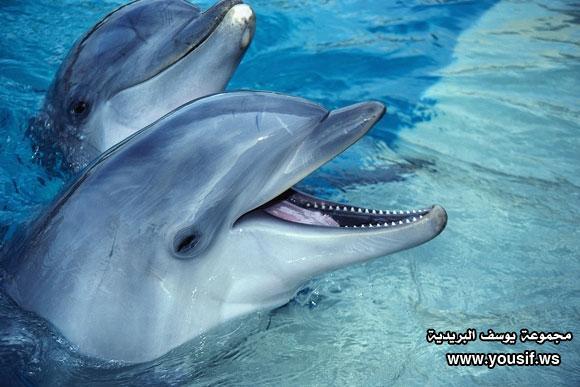 حقائق مذهلة عن الدلافين 423085784