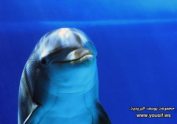 حقائق مذهلة عن الدلافين 616421306