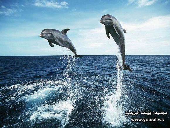 حقائق مذهلة عن الدلافين 751593575