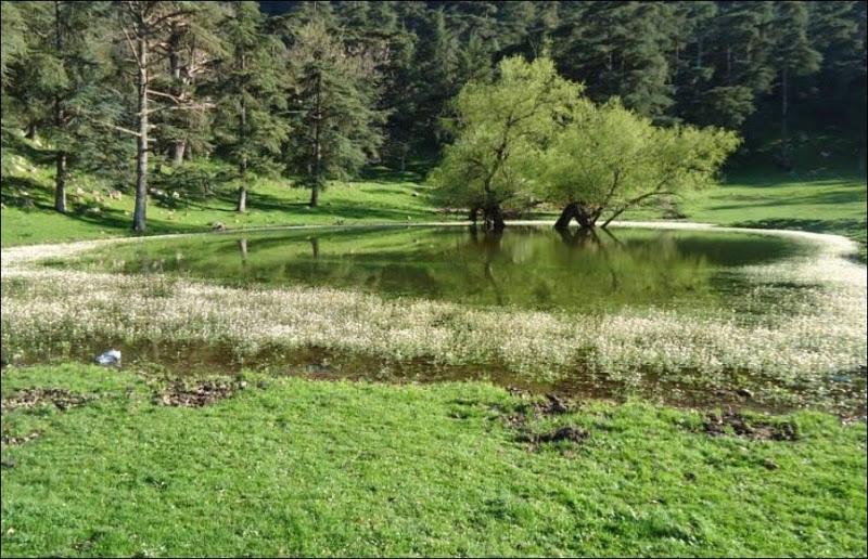 موسوعة شاملة عن المحميات الطبيعية - حصريا على منتدى واحة الإسلام - صفحة 2 792921808