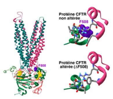 Illustration Pour Aider La Recherche CFTR-CNRS