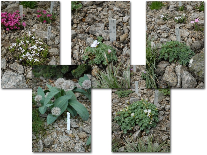 Rock' Gardener Club Prague 1711840
