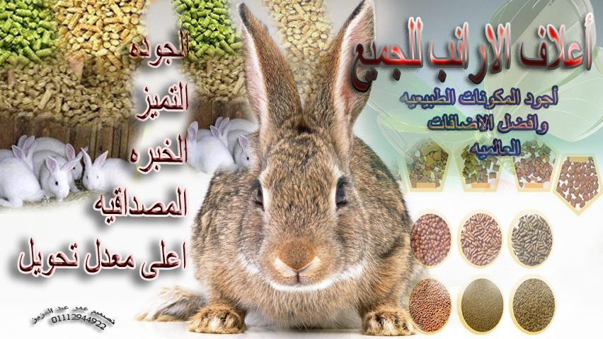 الأرانب - المكتبه الشامله لامراض الارانب وطرق علاجها اسطوانة حصريه لمنتدى الأرانب للجميع  420119101