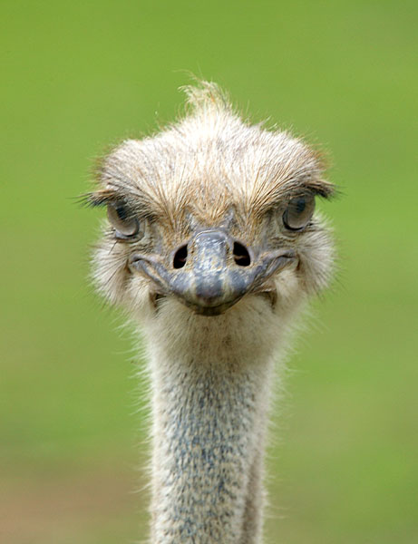 One Positive.  One Negative Ostrich-743694