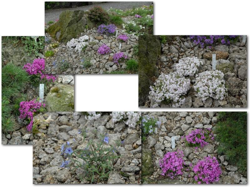 Rock' Gardener Club Prague 1711836