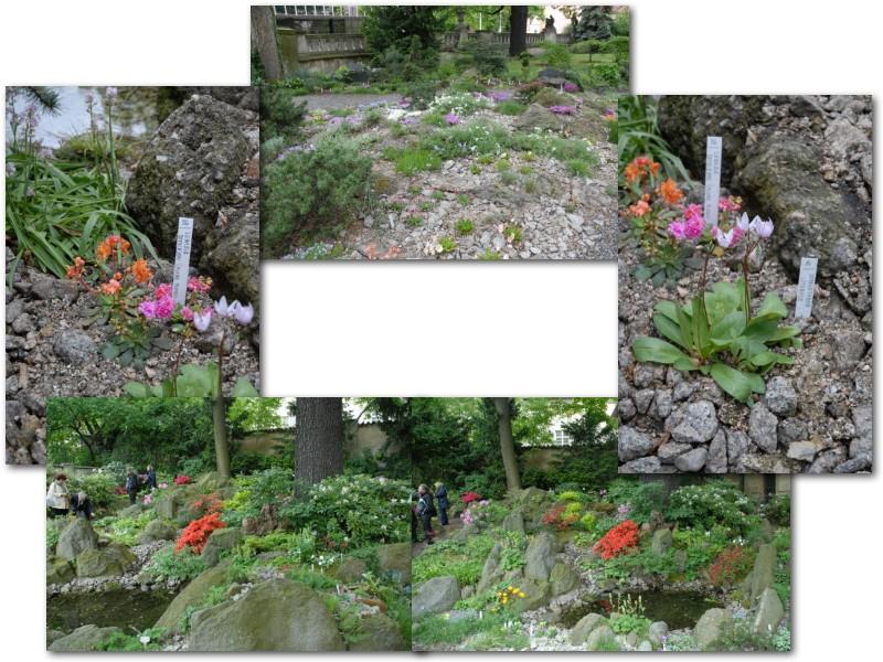 Rock' Gardener Club Prague 1711871