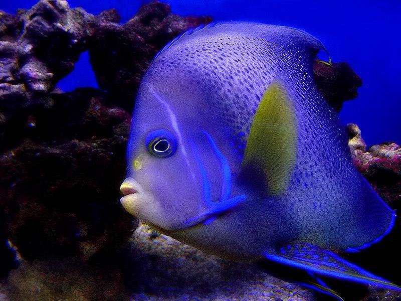 اسماء و أنواع الاسماك الزينة التي يمكن تربيتها بالصور 768327903