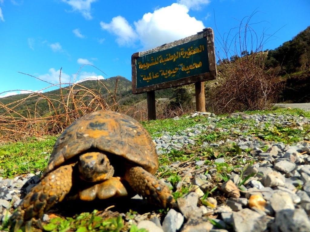 موسوعة شاملة عن المحميات الطبيعية - حصريا على منتدى واحة الإسلام - صفحة 2 465875355