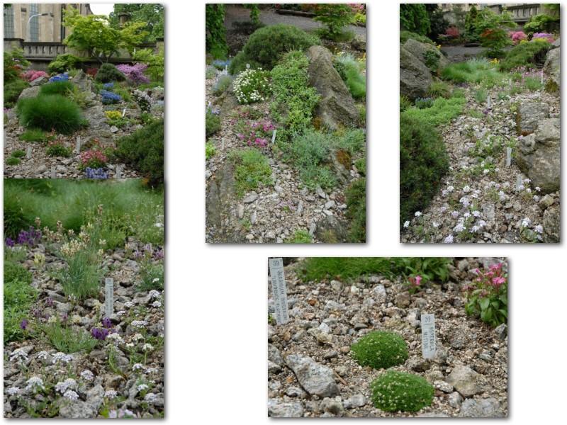 Rock' Gardener Club Prague 1711858