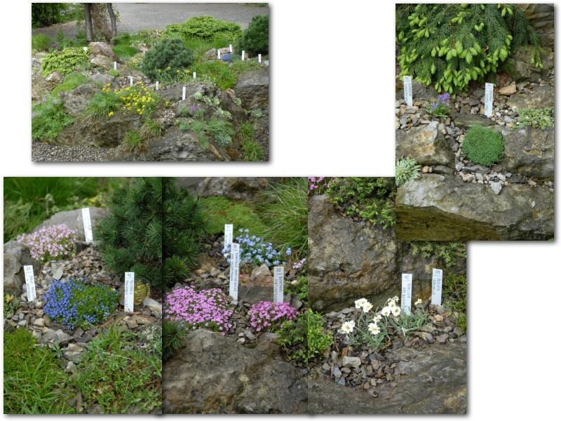 Rock' Gardener Club Prague 1711863