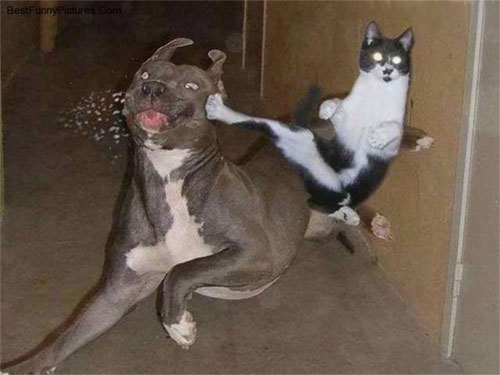 ضحك بلا حدود 821karate-cat1