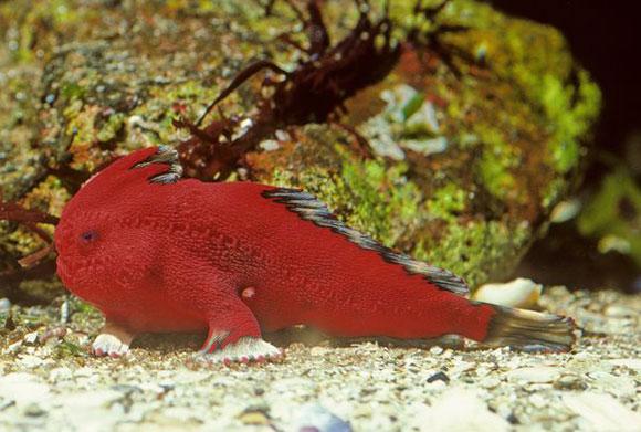 اكتشاف علمي مذهل: أسماك تمشى!!..سبحان الخالق العظيم  504376930