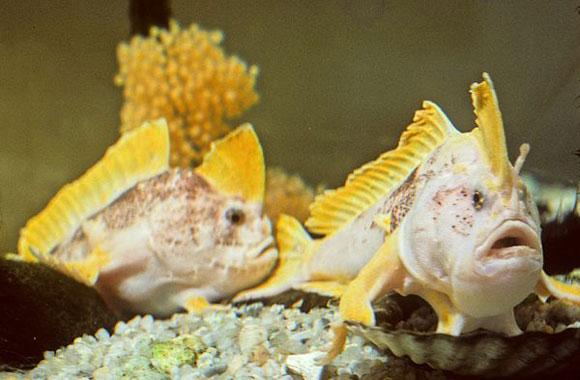 اكتشاف علمي مذهل: أسماك تمشى!!..سبحان الخالق العظيم  553851850