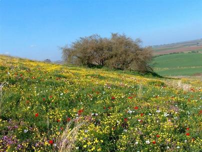 فلسطين في صور 329765343