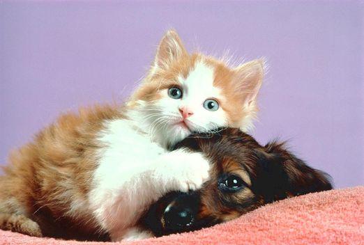 Les macs de la mignonnitude du règne animal - Page 2 Cat_and_dog02