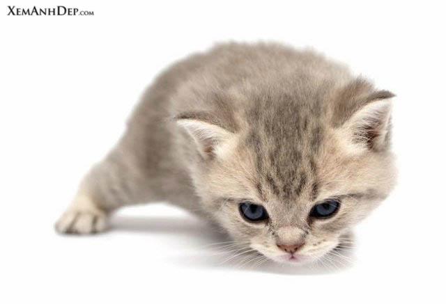 Kute Cat Cute_cat116