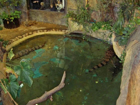 Krokodili 45648_ubXwHf