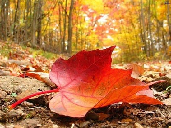 La feuille meurtrie - Elisa Mercoeur Occuper-les-enfants-en-automne-avec-des-feuilles-mortes
