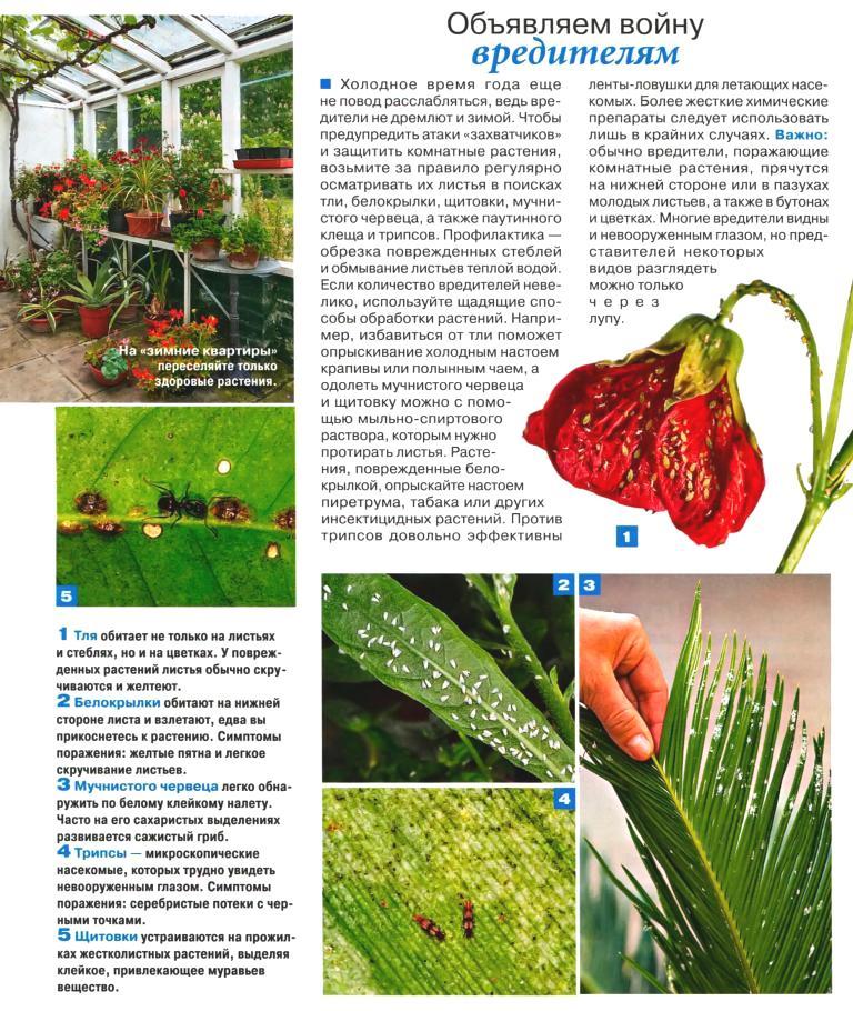 вредители комнатных растений 35