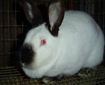 ZAJAK Rabbit_clip_image002_0004