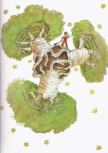 citrouille algonquine - Page 2 Baobabs